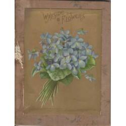 Wayside Flowers - arranged...